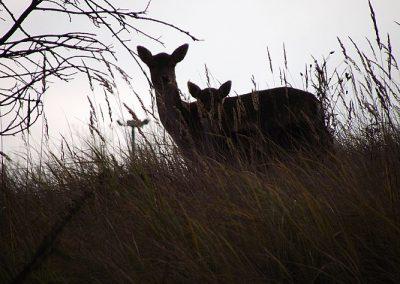 Land Fill Deer Dec 2012 004 (1)